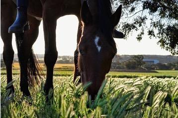 Equestrian Farm Legal Issues