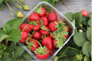 Raleigh Strawberries for Sale