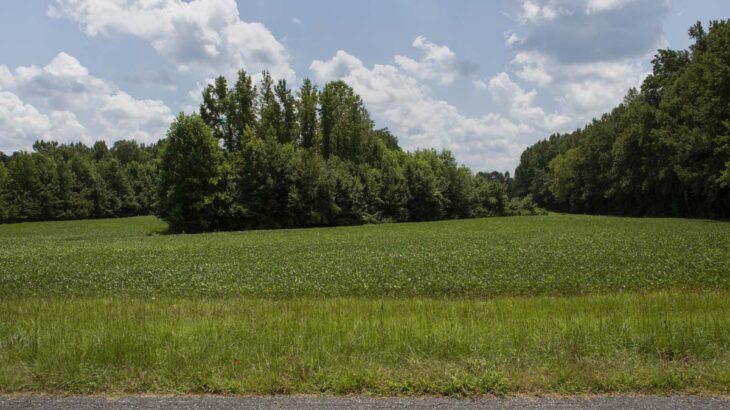 Liles Dean Road